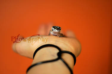 The Lizzardbaby by DominoPhotography