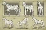 Study - Horse 3