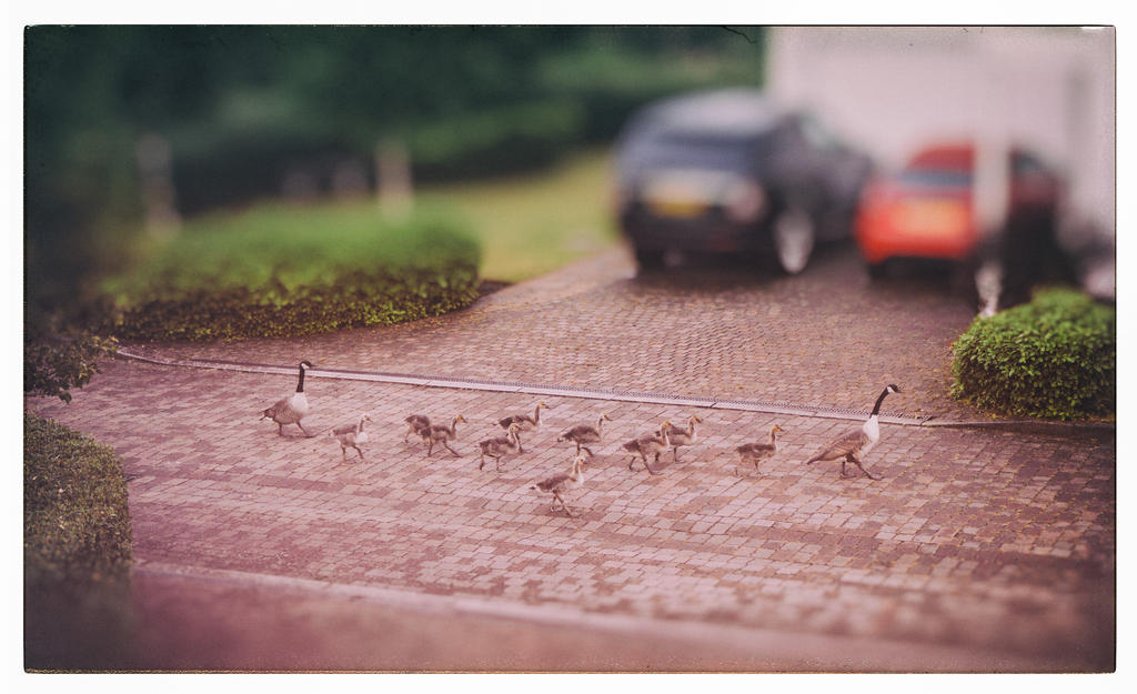 The Family Outing by deepgrounduk
