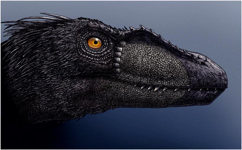 Archaic - Black Raptor by eorhythm