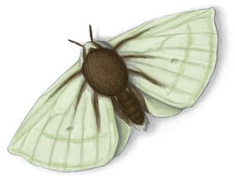 Moth by eorhythm