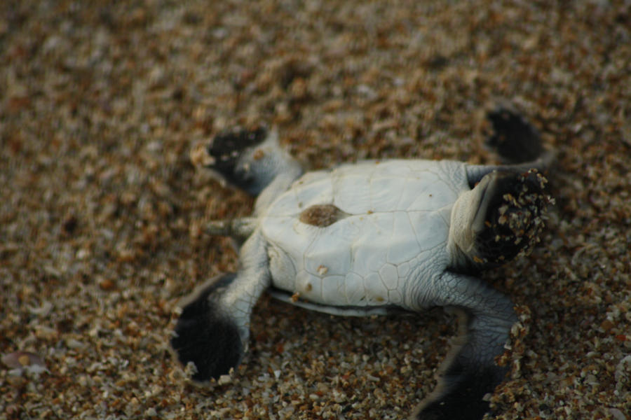 a turtle pose by JUanDavin