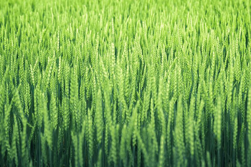 Rye by dSavin