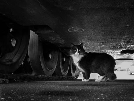 Kitty Under The Tank