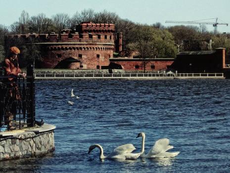 Der Dona And Swans In Koenigsberg
