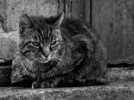 Melancholy Cat