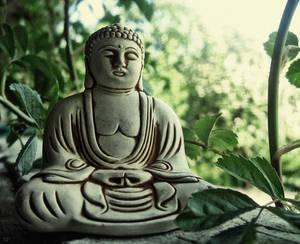 The Teachings Of The Buddha Are Everywhere