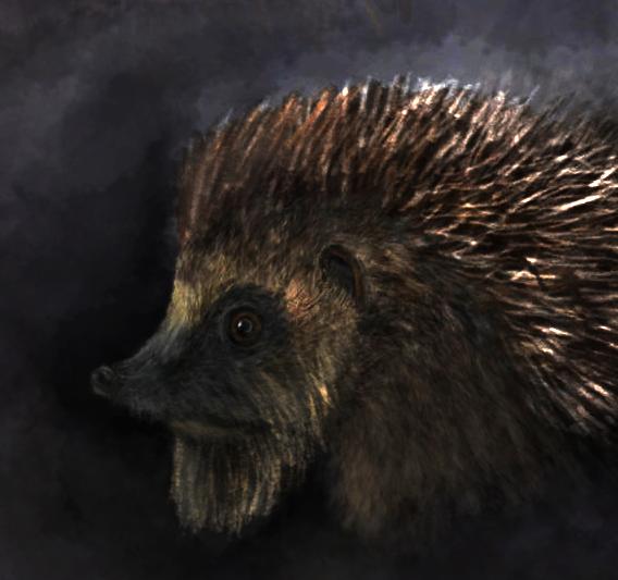 Hedgehog Icon by A-Pancake