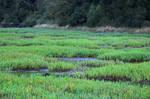 Stock-Marsh