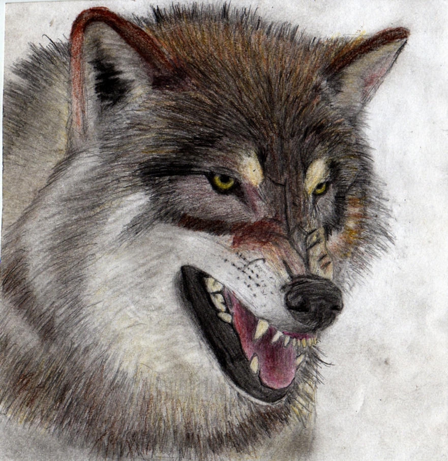Angry Wolf Face Profile