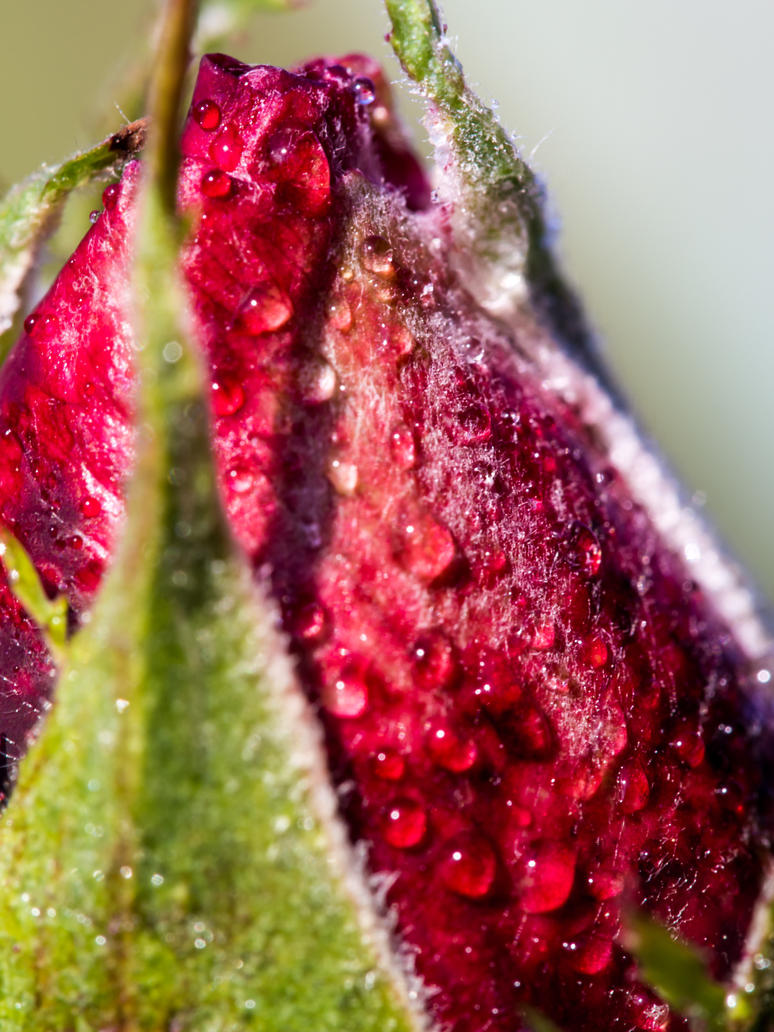 Macro photography 10 by BlueX-pl