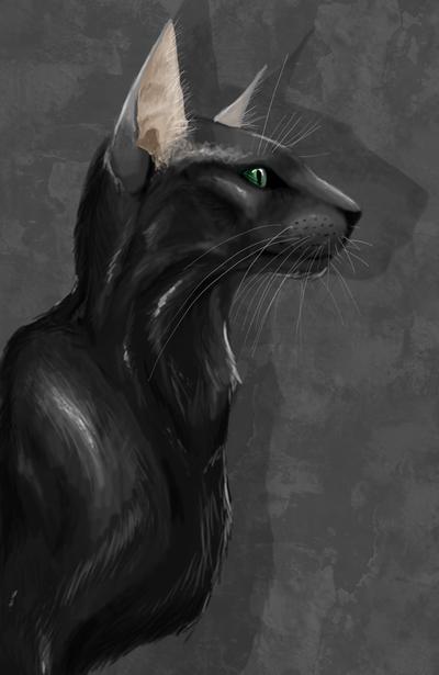 Oriental cat by Rikuko
