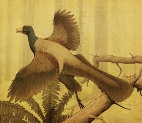 Archaeopteryx by Apsaravis