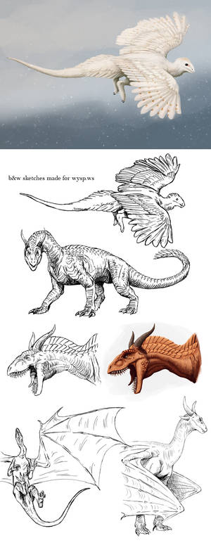 dragons - sketches