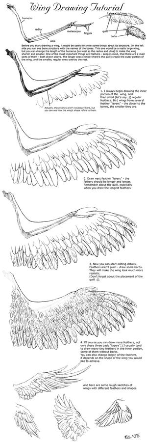 Wing Drawing Tutorial