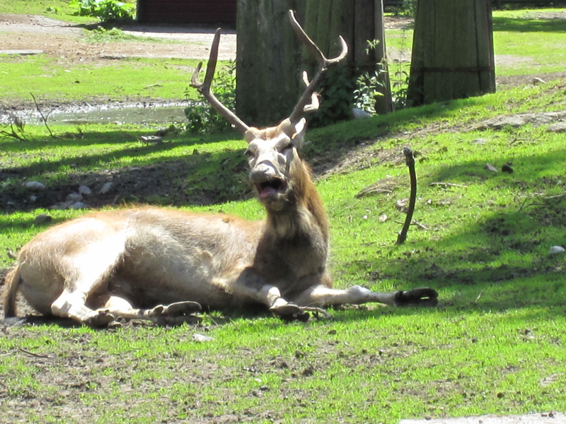 Deer_by_Amaunet85.jpg