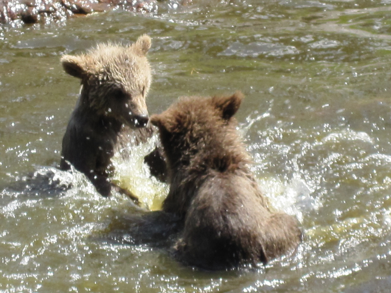 Bear_3__playing_in_the_water_by_Amaunet85.jpg