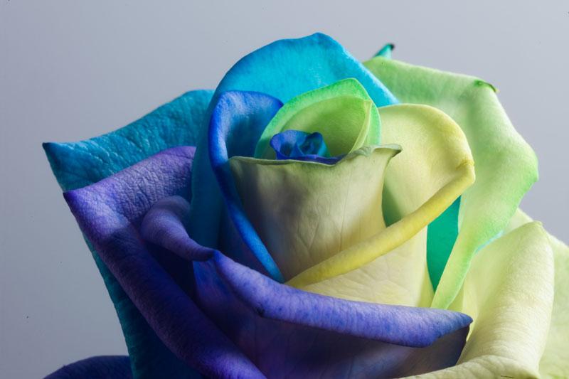 Happy Roses Ocean by RAINBOWedROSES