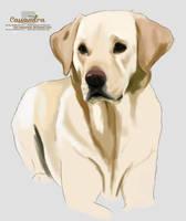 puppy quick sketch by secretSWC