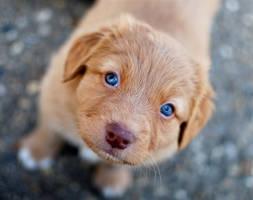 Blue eyes by ANIMAxphoto