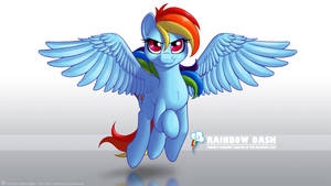 Wallpaper - Rainbow Dash