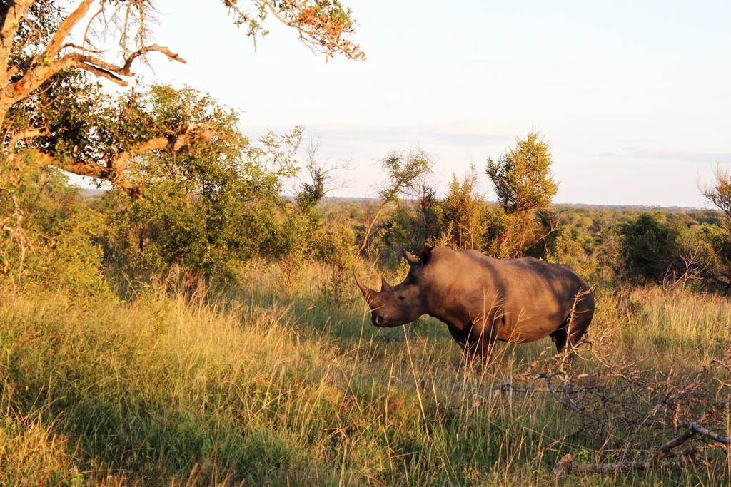 African Rhino by ZevGordoni
