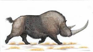 wooly rhinoceros (Coelodonta antiquitatis)