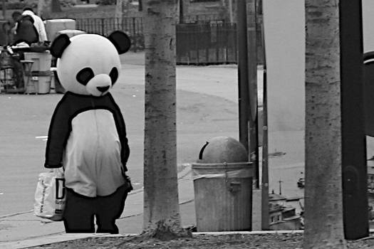 Panda had a Long Day