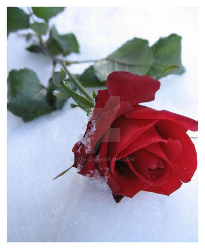 очень плодотворный качать видио плакали розы замечательные ягоды