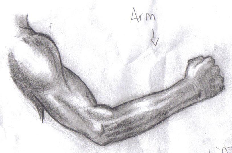 Muscular Arm Drawing M... Flexing Bicep Drawing