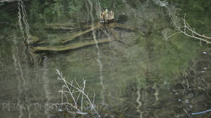 Driftwood in the Pond