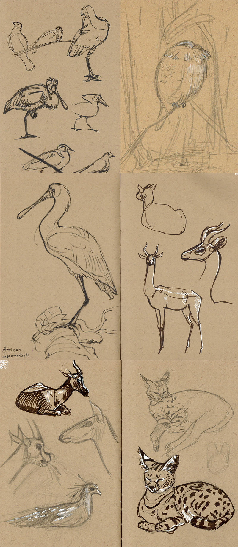 zoo sketchdump5 (san diego) by captainhawkeh