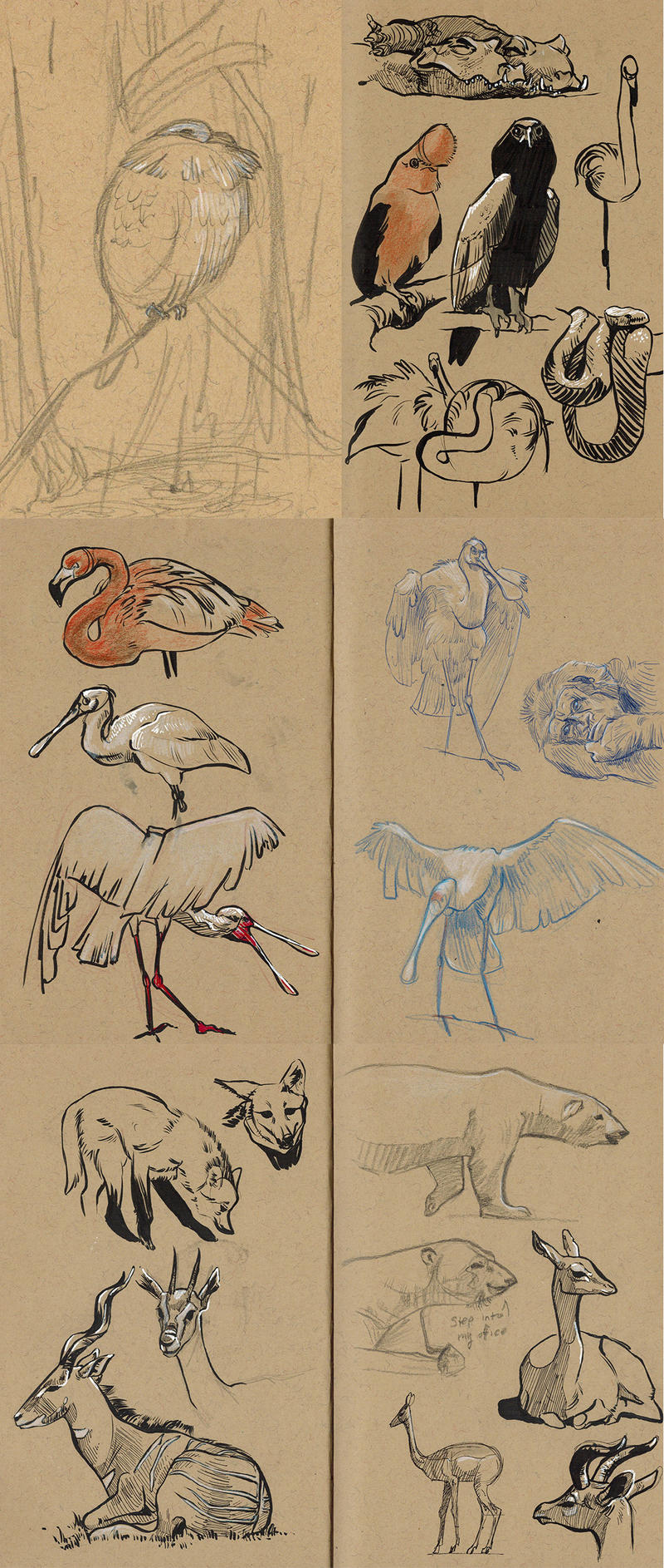 zoo sketchdump6 (san diego) by captainhawkeh