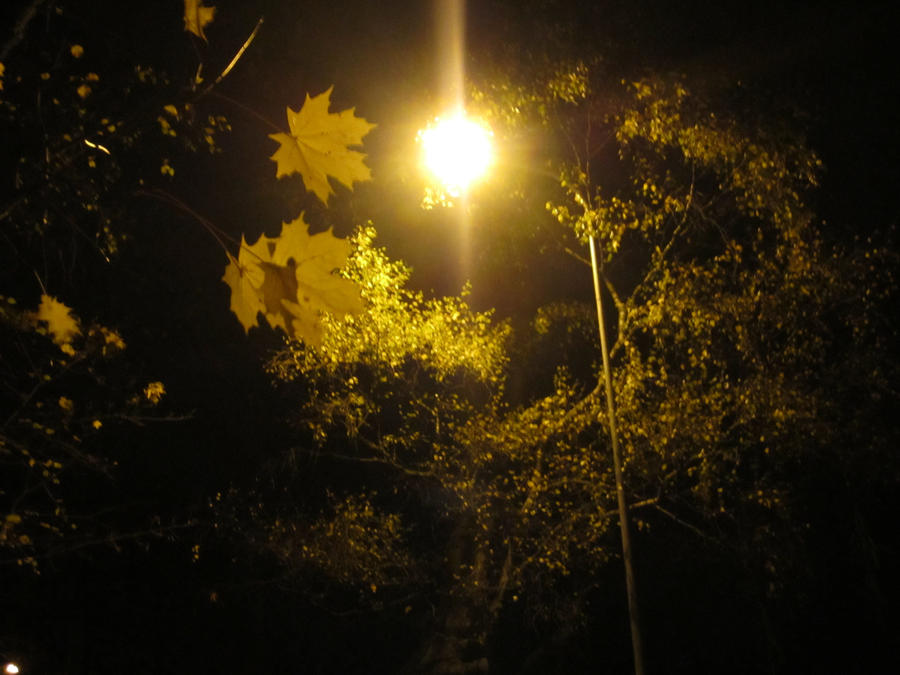 Autumn by Ronja-poni