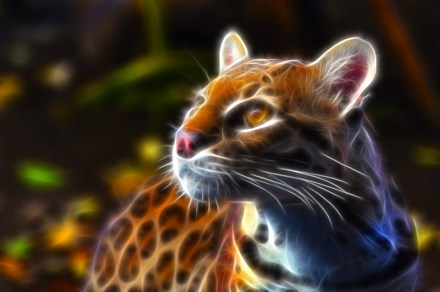 Leopardus Pardalis - Ocelot by justinlavelle