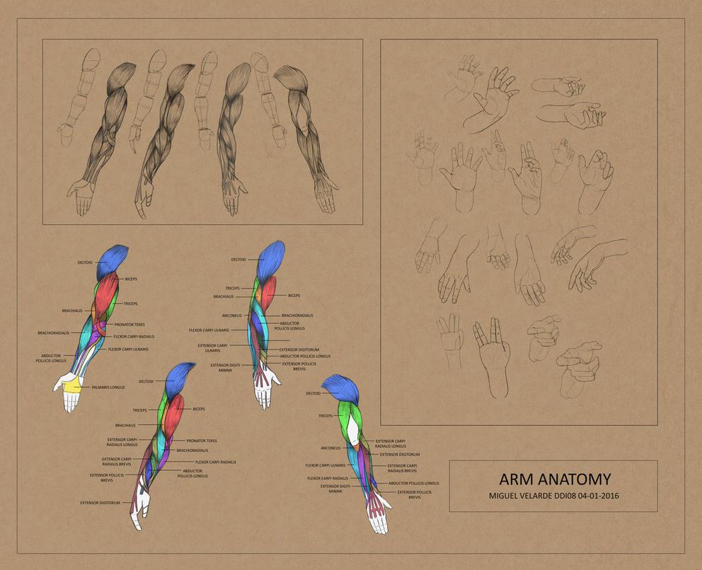 Anatomy 4 by iamdiamondflavor