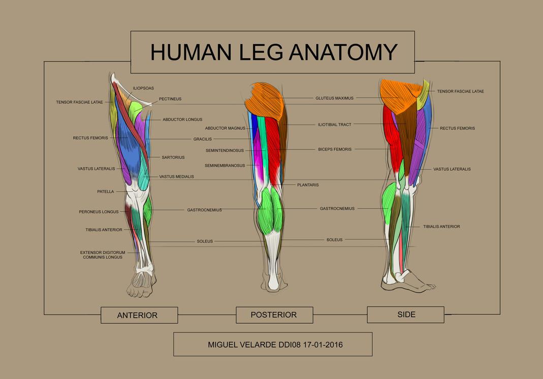 Anatomy 5 by iamdiamondflavor