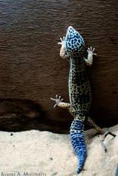 Spider Gecko Leo by Nawamane