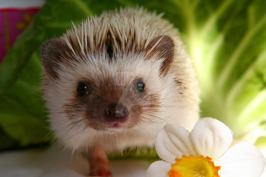 Hedgehog Croquet by slightlyoff-beat