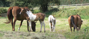 horse stock 11