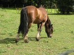 horse stock 13 by dark-dragon-stock