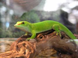 lizard stock 10 by dark-dragon-stock