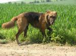 muddy dog 4