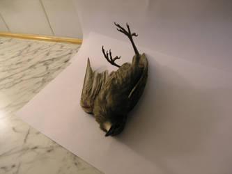 dead bird stock 2 by dark-dragon-stock