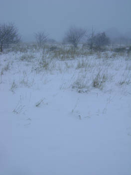 snowy fields -fog- 75