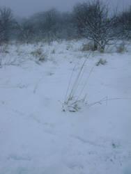 snowy fields -fog- 85 by dark-dragon-stock