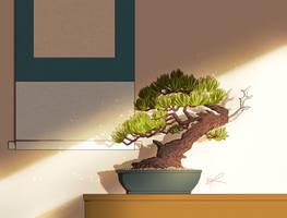 Bonsai Light Study