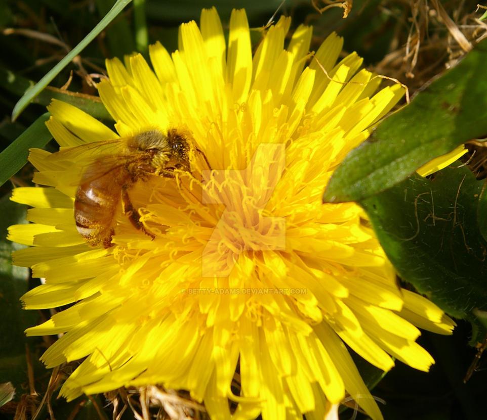 bee spring chat Bee spring, penang, malaysia 280 likes we are open at 26, persiaran karpal singh 2.