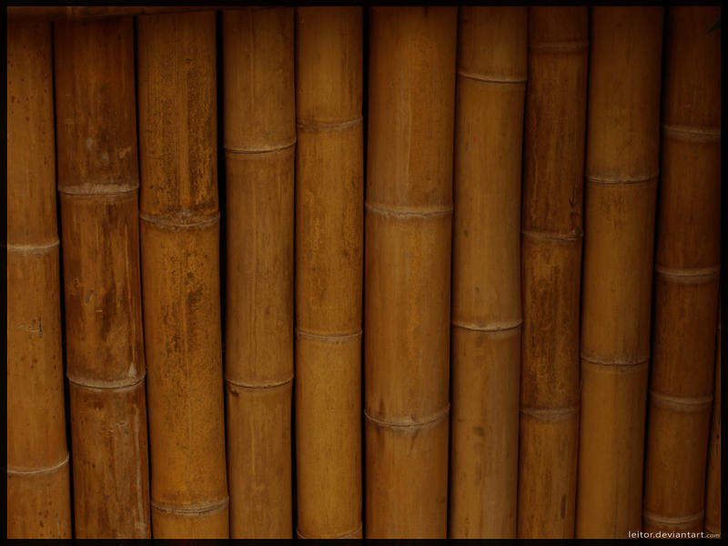Bamboo by Leitor