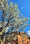Spring in Town 2